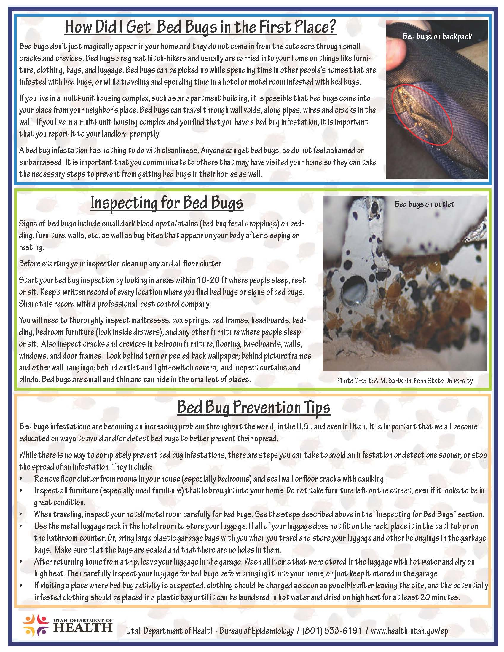Facts about bed bugs tooele county health department for Bed bugs on sheets